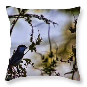Fall Silhouette Throw Pillow by Gary Holmes
