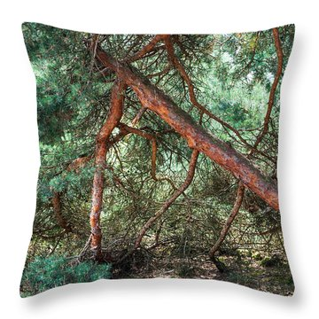 Falling Pine Tree In Veluwe National Park. Netherlands. Throw Pillow by Jenny Rainbow
