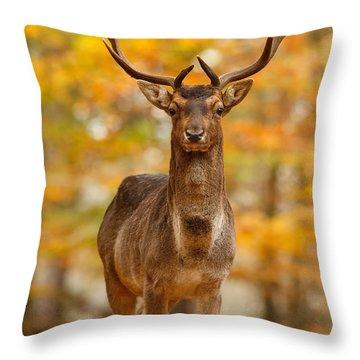 Fallow Deer In Autumn Forest Throw Pillow