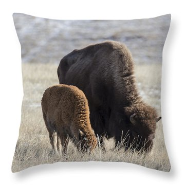 Bison Calf Having A Meal With Its Mother Throw Pillow