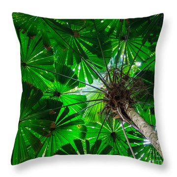 Fan Palm Tree Of The Rainforest Throw Pillow by Peta Thames