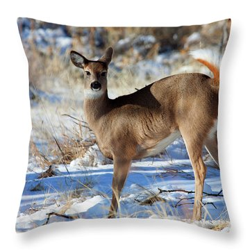 Throw Pillow featuring the photograph Fancy Pants by Jim Garrison