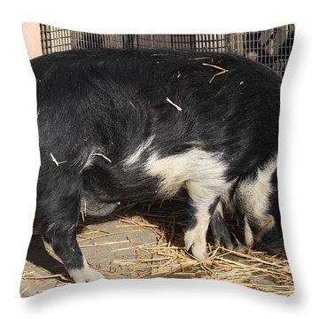 Farm Pig 7d27344 Throw Pillow