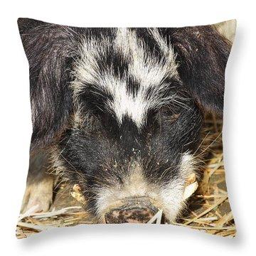 Farm Pig 7d27361 Throw Pillow