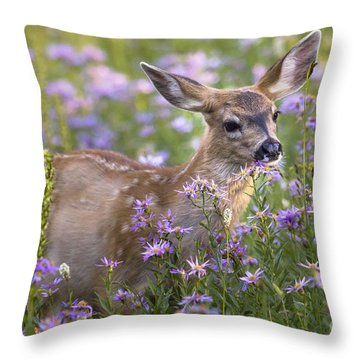 Fawn In Asters Throw Pillow by Sonya Lang