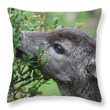 Fawn In The Rain Throw Pillow by Katie Wing Vigil