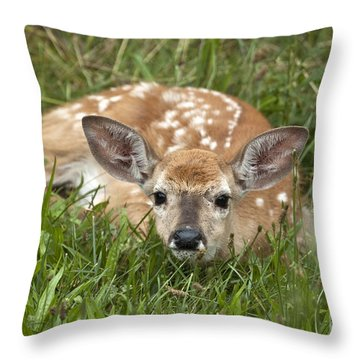 Throw Pillow featuring the photograph Fawn by Jeannette Hunt