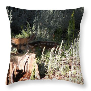 Fawn Front Yard Divide Co Throw Pillow