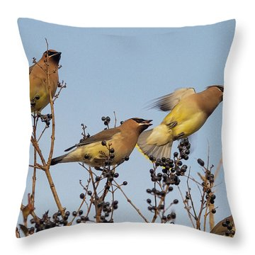 Throw Pillow featuring the photograph Feasting Cedar Waxwings by Constantine Gregory