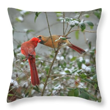 Feeding Cardinals Throw Pillow by Geraldine DeBoer