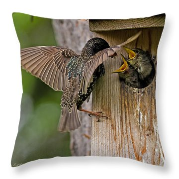Feeding Starlings Throw Pillow by Torbjorn Swenelius