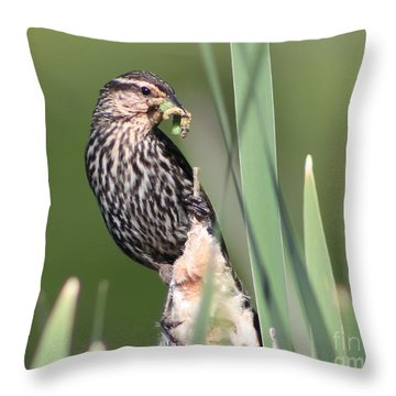 Throw Pillow featuring the photograph Feeding Time by Anita Oakley