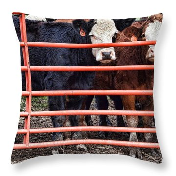 Feeding Time Throw Pillow by Laurinda Bowling