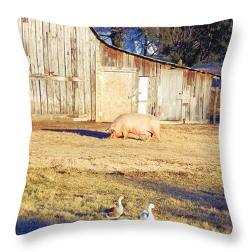 Feel The Sun Throw Pillow by Jan Amiss Photography