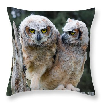 Feeling A Little Grumpy Are We? Throw Pillow by Barbara McMahon