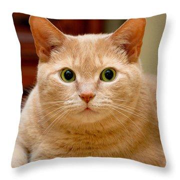 Feline Portrait Throw Pillow by Amy Cicconi