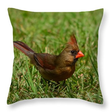 Throw Pillow featuring the photograph Female Cardinal by Bob Sample