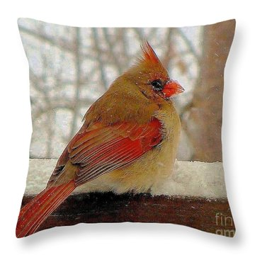 Female Cardinal Caught In Snowstorm Throw Pillow