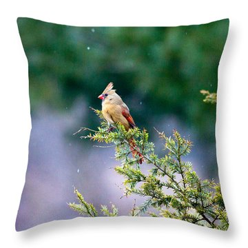 Throw Pillow featuring the photograph Female Cardinal In Snow by Eleanor Abramson