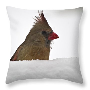Snowy Peek-a-boo Throw Pillow