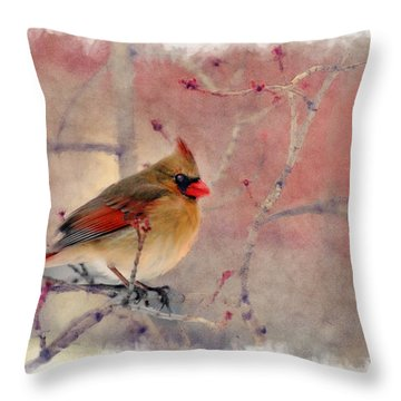 Female Cardinal Portrait Throw Pillow by Dan Friend
