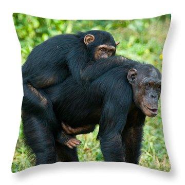 Female Chimpanzee Pan Troglodytes Throw Pillow