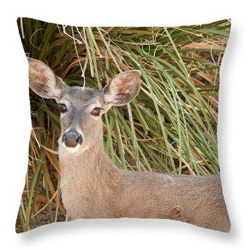 Throw Pillow featuring the photograph Female Desert Mule Deer by Daniel Hebard