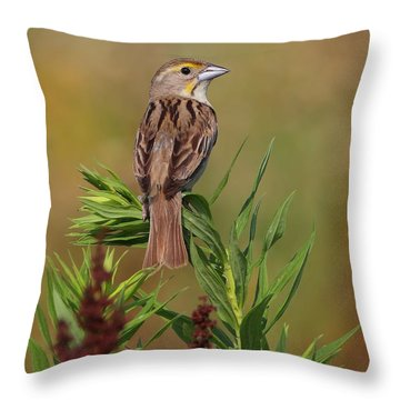 Female Dickcissel Throw Pillow by Daniel Behm