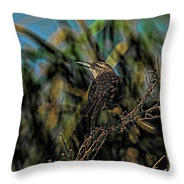 Female Grackle On The Dark Side Throw Pillow by Deborah Benoit