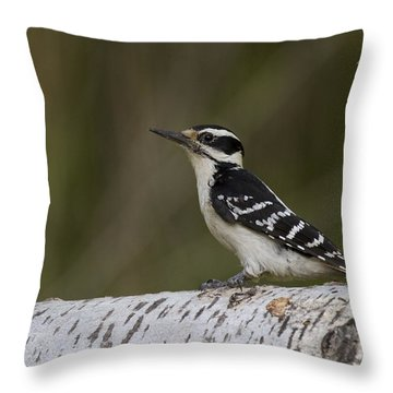 Female Hairy Woodpecker Throw Pillow by Linda Freshwaters Arndt