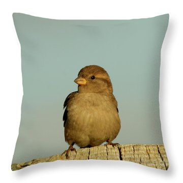 Female House Sparrow Throw Pillow by Bob and Jan Shriner