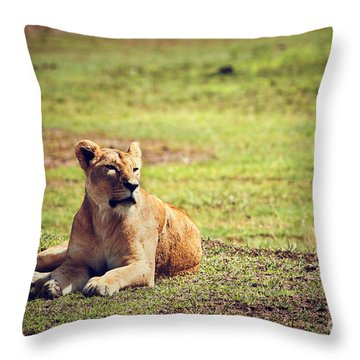 Female Lion Lying. Ngorongoro In Tanzania Throw Pillow by Michal Bednarek