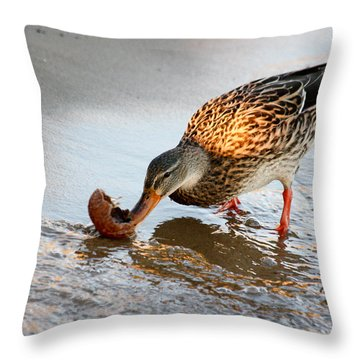 Female Mallard Duck  Throw Pillow by Ann Murphy