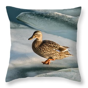 Female Mallard In A Cold World Throw Pillow
