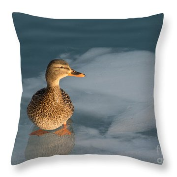 Female Mallard In Icy Water Throw Pillow