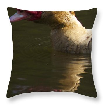 Female Muscovy Duck Throw Pillow by Allan Morrison