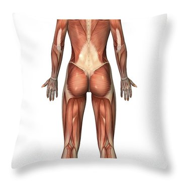 Female Muscular System, Back View Throw Pillow by Stocktrek Images