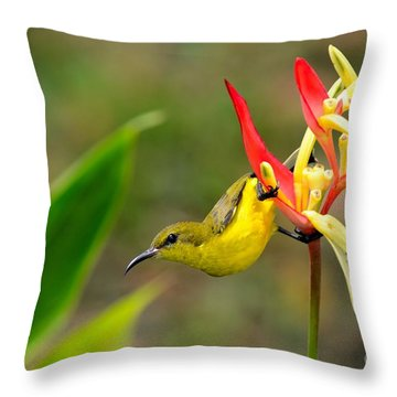 Female Olive Backed Sunbird Clings To Heliconia Plant Flower Singapore Throw Pillow by Imran Ahmed