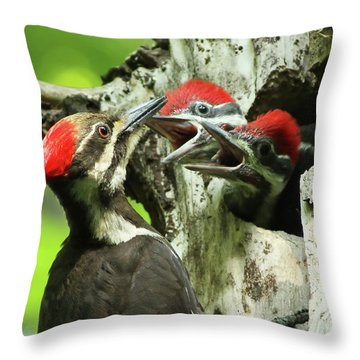 Female Pileated Woodpecker At Nest Throw Pillow