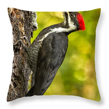 Female Pileated Woodpecker No. 2 Throw Pillow