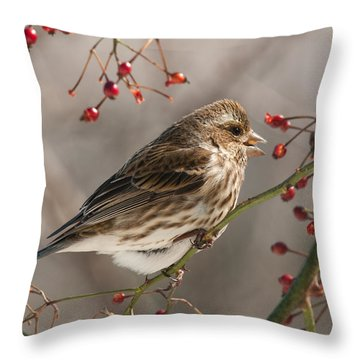 Throw Pillow featuring the photograph Female Purple Finch On Berries by Lara Ellis