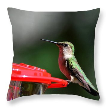 Female Ruby Throat At Feeder Throw Pillow