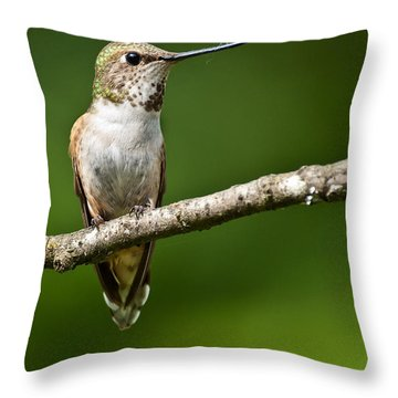 Female Rufous Hummingbird In A Tree Throw Pillow by Jeff Goulden