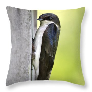 Tree Swallow On Nestbox Throw Pillow by Christina Rollo