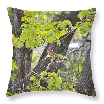 Feminine Cardinal Throw Pillow by Sonali Gangane