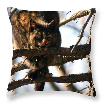 Feral Cat In Pine Tree Throw Pillow