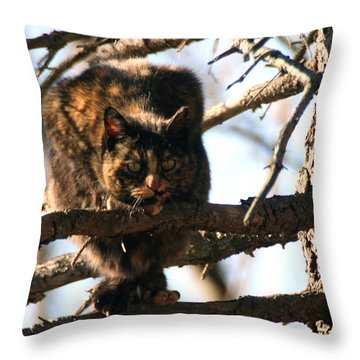 Throw Pillow featuring the photograph Feral Cat In Pine Tree by William Selander