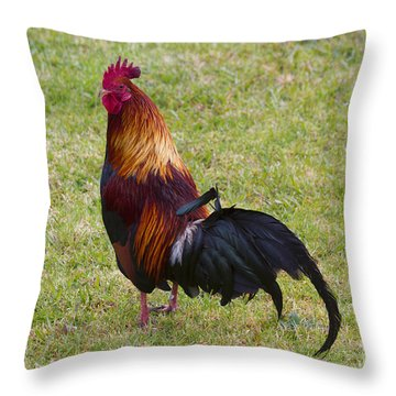 Feral Rooster Throw Pillow by Mike  Dawson