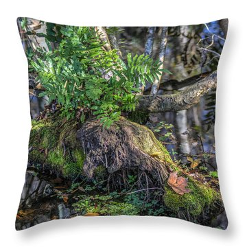 Fern In The Swamp Throw Pillow by Jane Luxton
