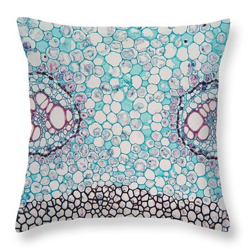 Fern Pteridium Rhizome, Lm Throw Pillow